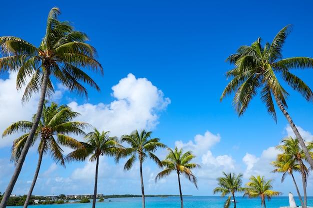 Florida-schlüsselpalmen am sonnigen tag florida us