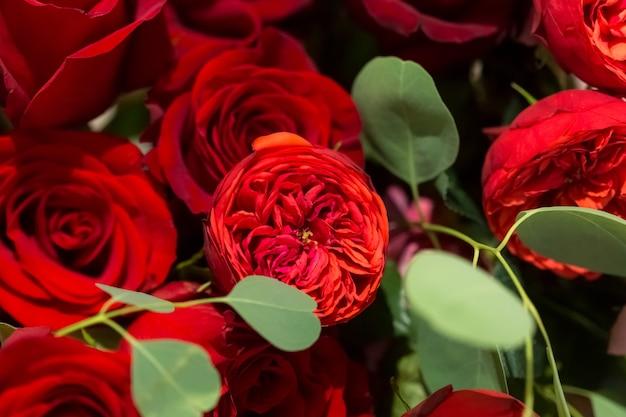Floristische zusammensetzung von wunderschönen roten pfingstrosenrosen und eukalyptuszweigen