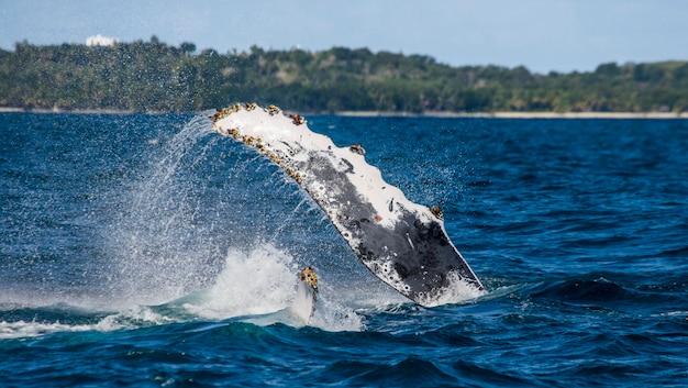 Flossenspritzen buckelwal