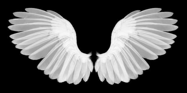 Flügel der vögel auf hintergrund