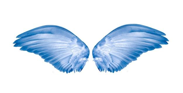Flügel des vogels auf weißem hintergrund