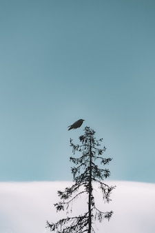 Flug des schwarzen vogels über baum