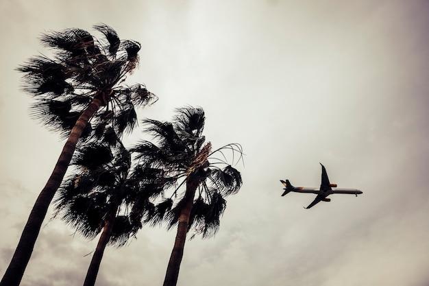 Flugzeug am himmel mit bäumen im vordergrund