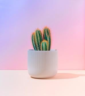 Fluoreszierender neonkaktus auf pastellrosa und blauem hintergrund mit farbverlauf. minimale kreative szene. natur-konzept.