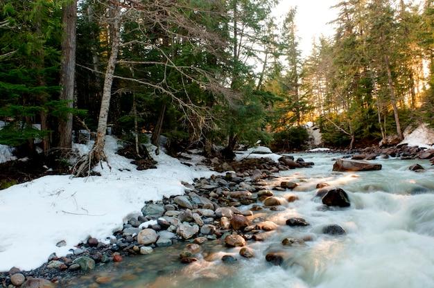 Fluss, der einen wald, pfeifer, britisch-columbia, kanada durchfließt