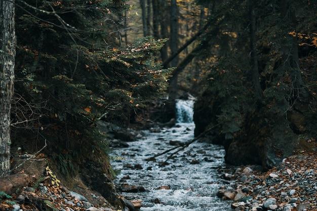 Fluss fließt zwischen den ufern im wald und reisemodelltourismus