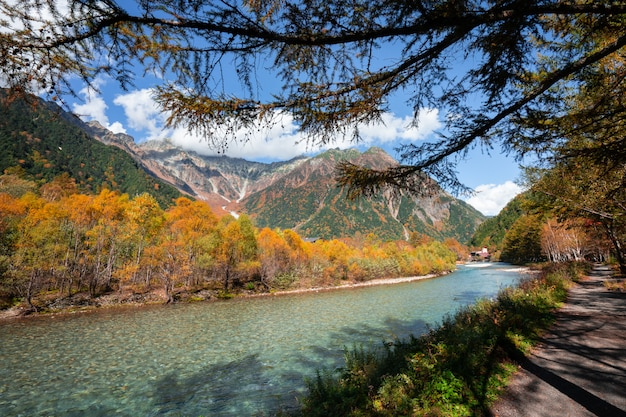 Fluss im kiefernwaldbaum, wandernd in kamikochi, japan