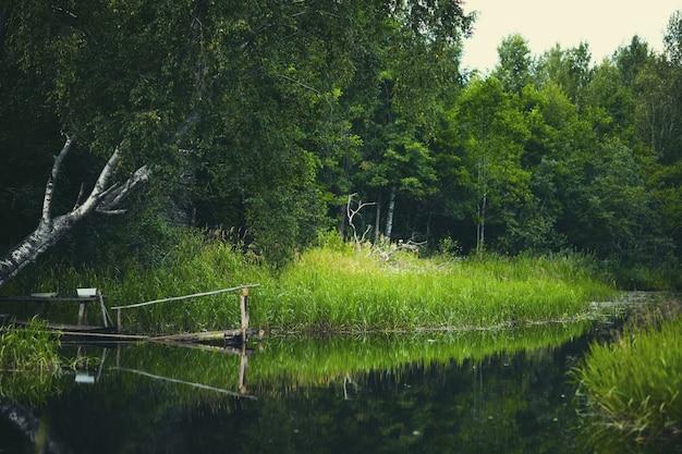Fluss in den grünen banken überwältigt mit holz. platz zum angeln.
