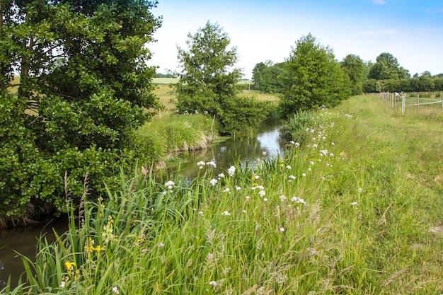 Fluss in der landschaft im frühjahr