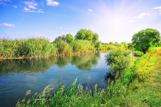 Fluss in einer wiese zwischen grünen bäumen