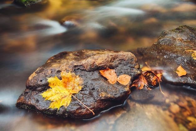 Fluss kamenice im herbst, böhmische schweiz