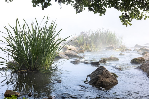 Fluss mit stromschnellen im nebel des frühen morgens.