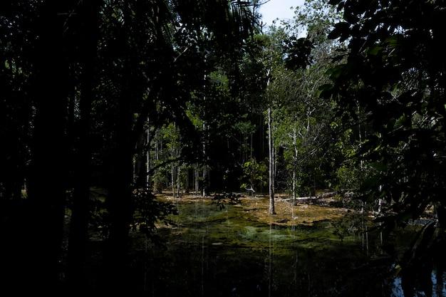 Fluss tief im gebirgswald. natur zusammensetzung