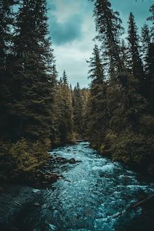 Fluss zwischen bäumen