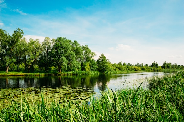 Flusslandschaft mit bäumen und schilf