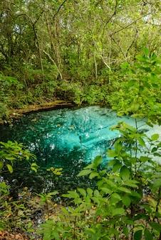Flussquelle mit türkisfarbenem wasser im regenwald in bonito mato grosso do sul brasilien