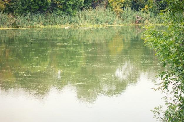 Flussschilf