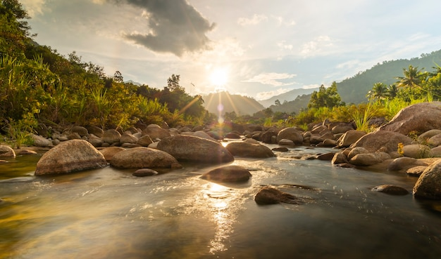Flussstein und baum mit sonnenstrahl, wasserflussbaum, steinfluss und sonnenstrahl im wald anzeigen