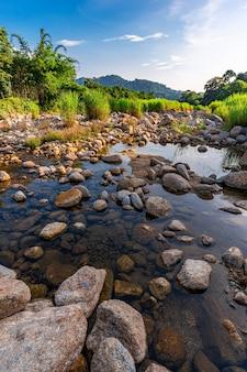Flussstein und baum, wasserflussbaum anzeigen, steinfluss im baumblatt im wald