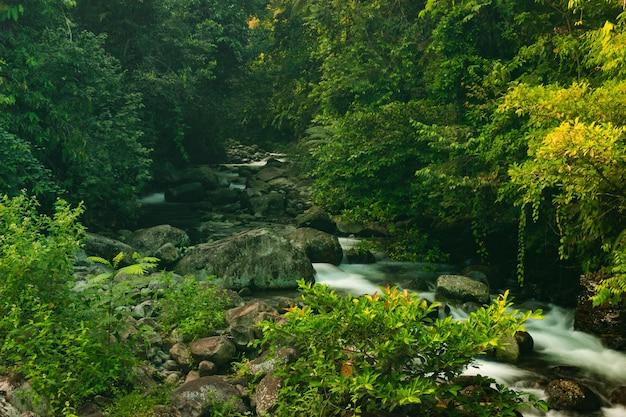 Flusswasserfluss mit schönen grünen blättern im tropischen wald von indonesien