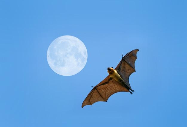 Flying fox fledermaus