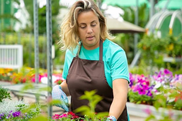 Fokussierte blonde frau, die sich um pflanzen im gewächshaus kümmert und handschuhe und schürze trägt. nachdenklicher weiblicher gärtner, der schöne blühende blumen im freien wächst. gartenarbeit und sommerkonzept