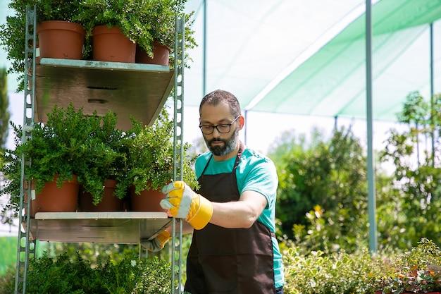 Fokussierter männlicher florist, der gestell mit pflanzen in töpfen bewegt, regal mit zimmerpflanzen hält. mittlere aufnahme, kopierraum. gartenberufskonzept