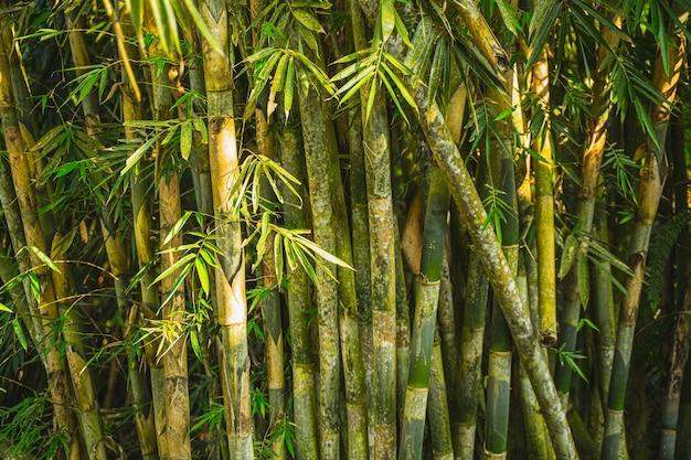 Fokussiertes foto auf sonnenlicht, das auf palmen ist, bild der tropischen natur ohne menschen