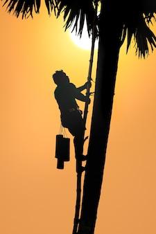 Folk klettern bäume, um zuckerpalme zu sammeln.