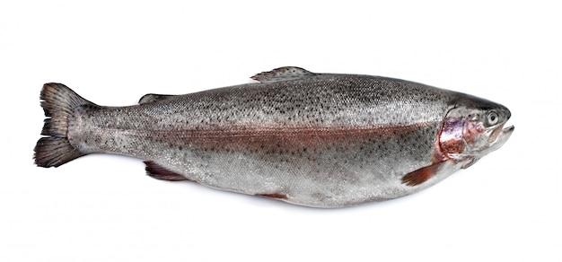 Forellenflussfisch isoliert
