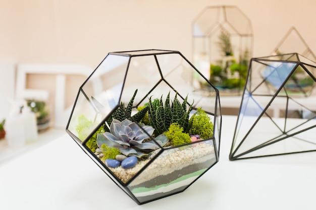 Form von glas und metall für pflanzen und innenräume, sukkulenten, sand, erde und pflanzen. heim- oder bürodekoration und innenarchitektur. pflanzen pflanzen und ein design erstellen