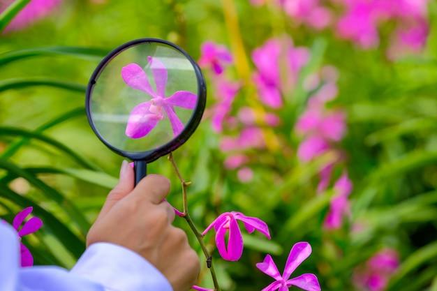 Forscher nehmen eine lupe, um violette orchideen zu leuchten.