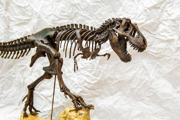 Fossilskelett von dinosaurierkönig tyrannosaurus rex