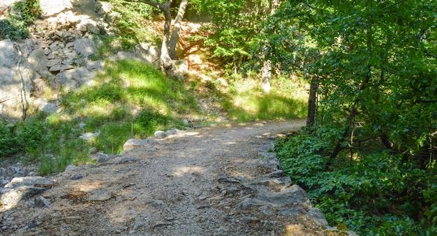 Foto an einem sonnigen sommertag, ein felsiger weg, der durch ein schattiges berggebiet mit dichter vegetation führt.