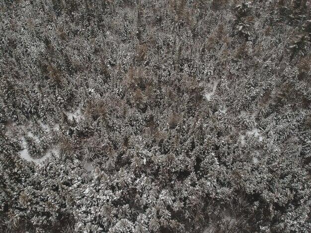 Foto aus der vogelperspektive des waldes