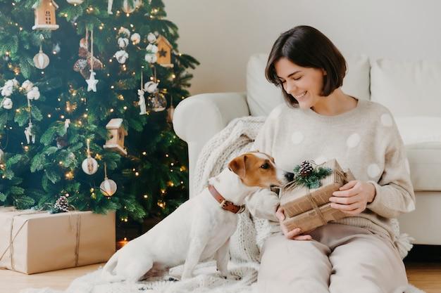 Foto der frohen brunettefrau hält weihnachtsgeschenk, wirft auf boden mit stammbaumsteckfassung-russell-terrierhund gegen gemütlichen innenraum auf