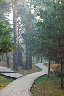 Foto der holzstraße, bäume am sommertag.