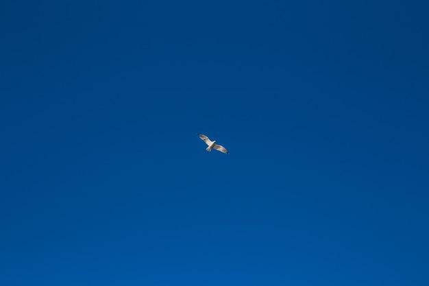 Foto der möwe im himmel mit wolken Premium Fotos