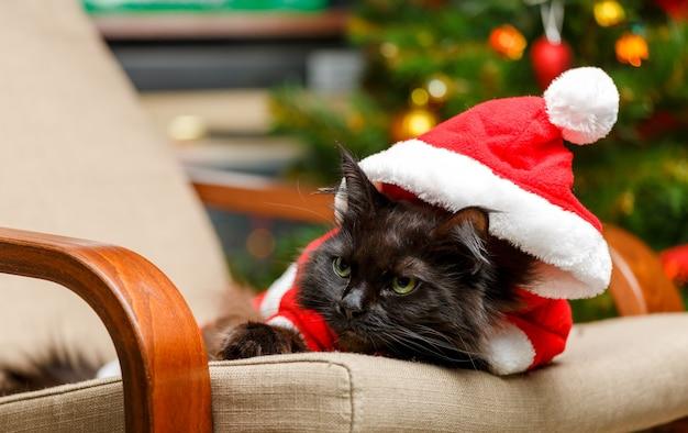 Foto der neujahrskatze im weihnachtsmannkostüm, das im stuhl sitzt