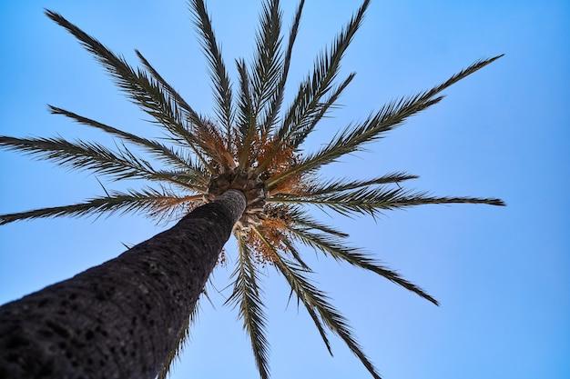 Foto der palme gegen blauen sonnigen himmel