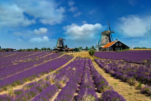 Foto der windmühle in holland mit blauem himmel