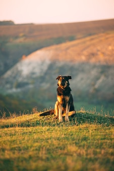 Foto des großen schönen hundes, der auf gras in der landschaft während des sonnenuntergangs in der herbstsaison sitzt