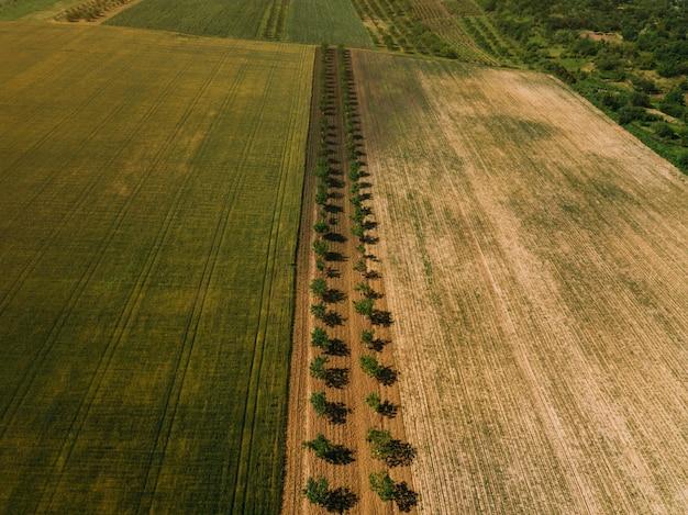 Foto des schönen ackerlandes, landschaft mit apfelbäumen, luftaufnahme