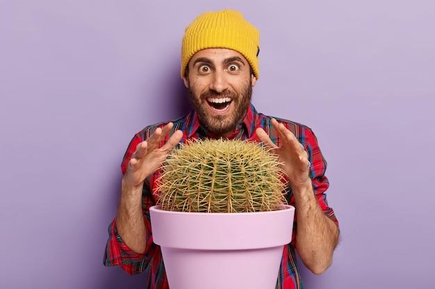 Foto des überraschten unrasierten mannes versucht, kaktus mit scharfen dornen zu berühren, lächelt glücklich, trägt gelben hut und zopfhemd, hat glücklichen lustigen gesichtsausdruck, posiert gegen lila wand. wow, welche pflanze!