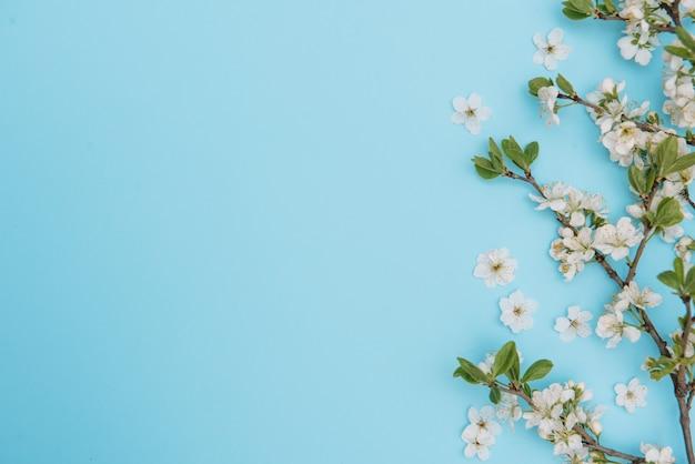 Foto des weißen kirschblütenbaums des frühlings auf blauer oberfläche