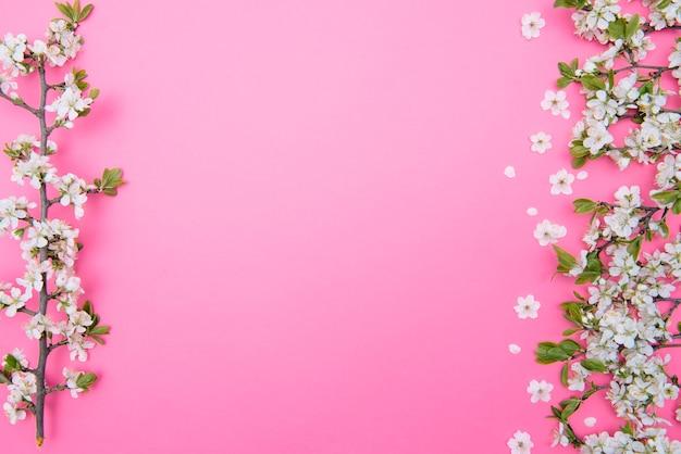 Foto des weißen kirschblütenbaums des frühlings auf rosa oberfläche