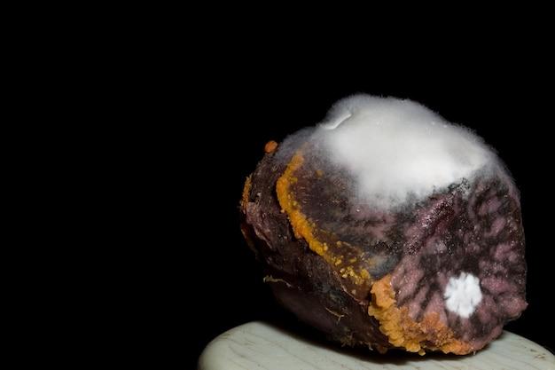 Foto des weißen pilzes auf gekochter frucht