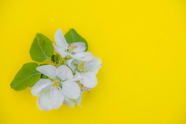 Foto eines blühenden apfelbaumzweigs