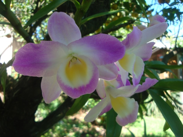 Foto eines exotischen orchideenblüte