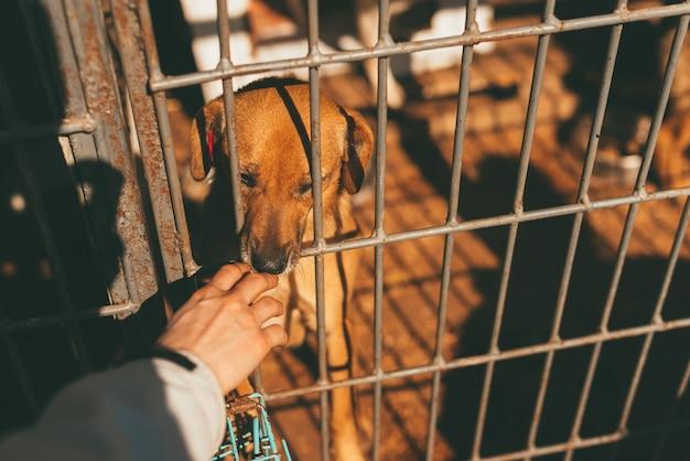 Foto eines traurigen hundes und einer hand, die ihn durch stäbe berührt.
